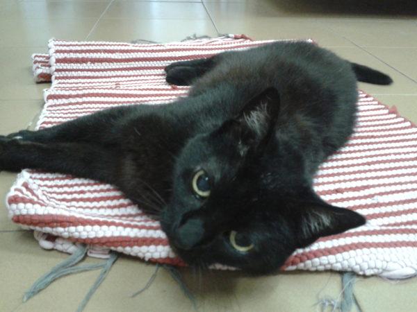 Gatos pretos e a sexta-feira 13